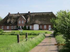 """Das Reetgedeckte Haus befindet sich auf einer Warft in ruhiger Lage / Ferienwohnung """"Haus lütje wehr"""" in Hattstedtermarsch"""