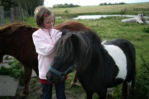 """Ponys auf dem Hof / Bauernhof/Ferienhof """"Schäferhof Dircks"""" in Westerhever"""