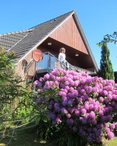 """Blick auf die Rhododendronblüte / Ferienwohnung """"Seaside - Familienurlaub mit Hund"""" in Husum-Schobüll"""