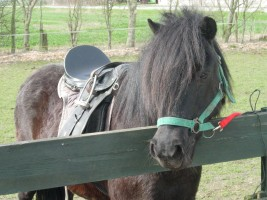 "Unser Pony Luzy / Bauernhof/Ferienhof ""Familie Wulff"" in Reussenköge"