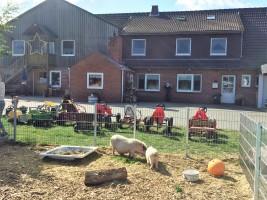 """Unser Streichelgehege mit den Minischweinen / Bauernhof/Ferienhof """"Schwalbennest II"""" in Vollerwiek"""