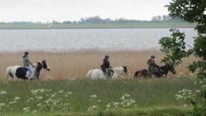 """Reiter auf dem Strandweg / Ferienwohnung """"Nordstrand***"""" in Husum - Schobüll"""