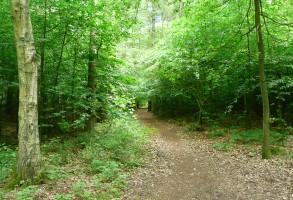 """Schobüll kommt aus dem dänischen und heißt Wald. Hier kann man bei einem Spaziergang herrlich entspannen. Auch ein romantischer Reitweg führt hier durch und ... / Ferienwohnung """"Nordstrand frei ab 29.10."""" in Husum - Schobüll"""