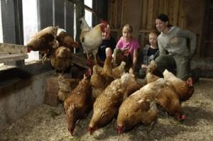 "Eier sammeln / Bauernhof/Ferienhof ""Familie Wulff"" in Reussenköge"