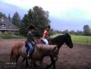 """Auch auf den Pferden können Sie den verdienten Urlaub genießen und mal ein Paar Runden auf dem Reitplatz drehen. / Ferienhaus """"Ferienhaus Süncksen"""" in Husum"""